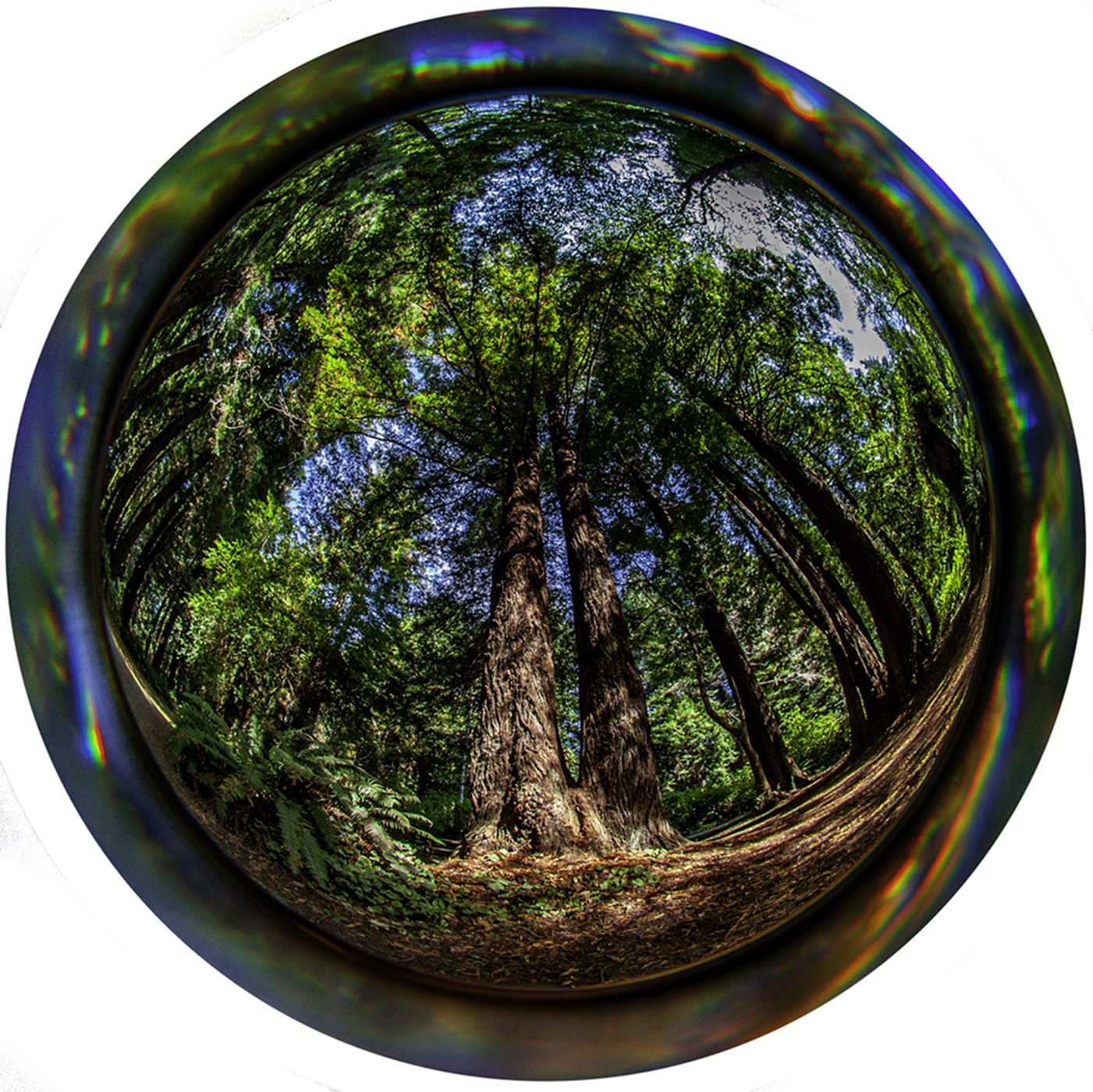 Through the Porthole… Redwoods
