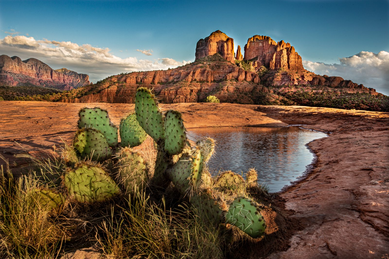 Cactus with Cathedral Rock and Water