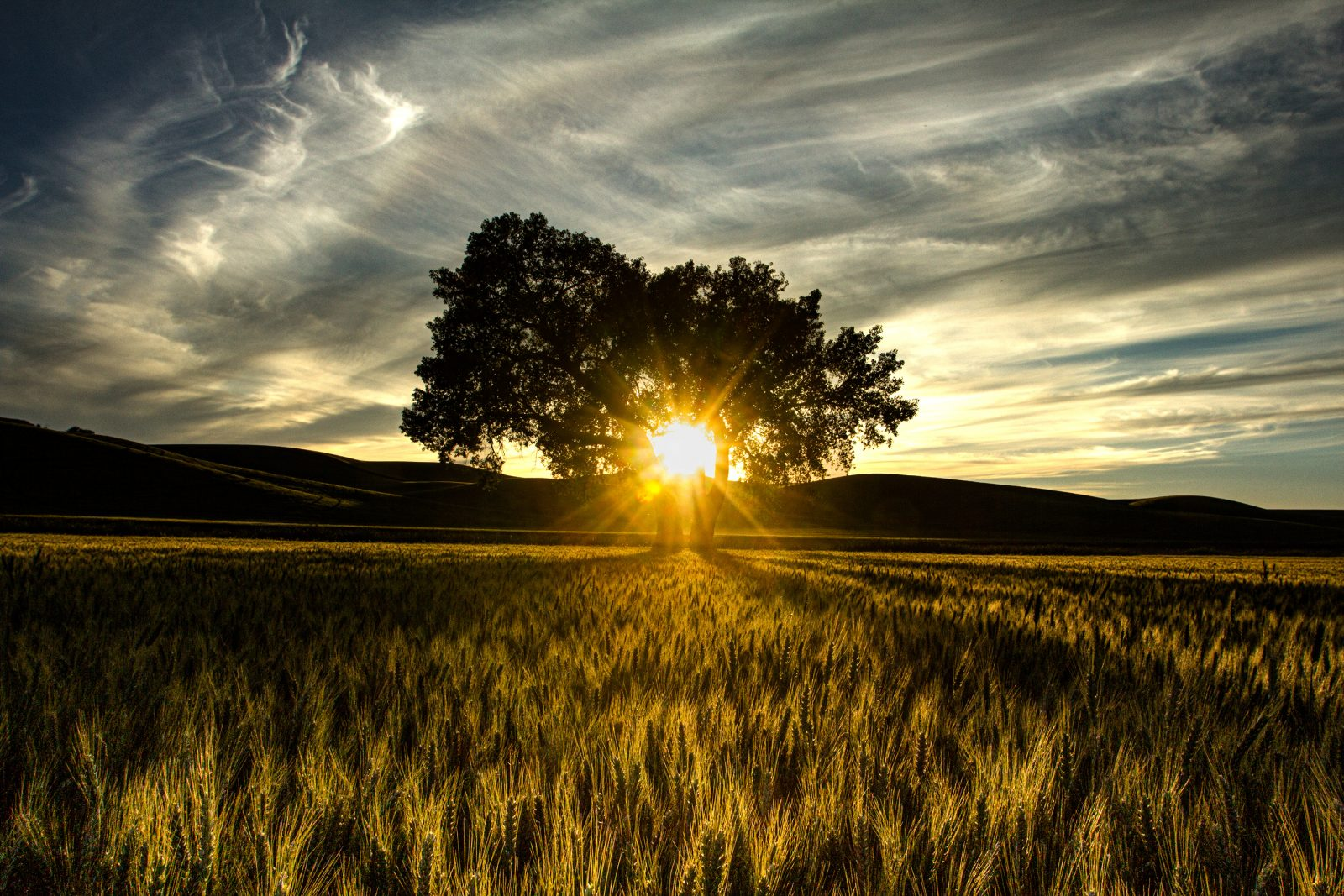 Tree with Sunburst and Grass at Sunset