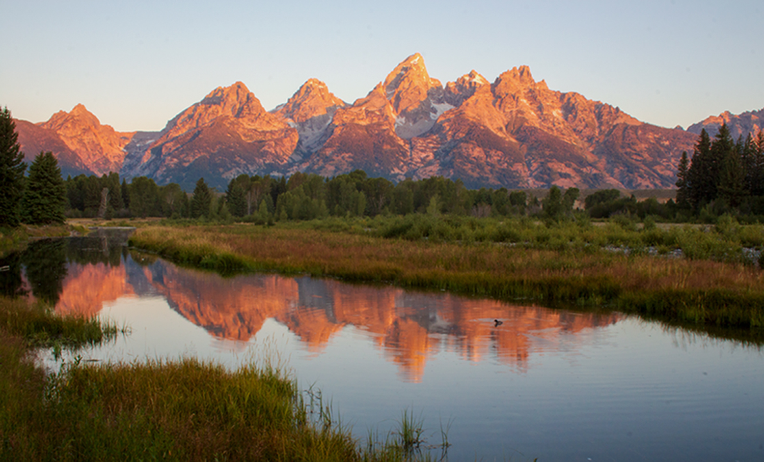 Teton Sunrise with Duck
