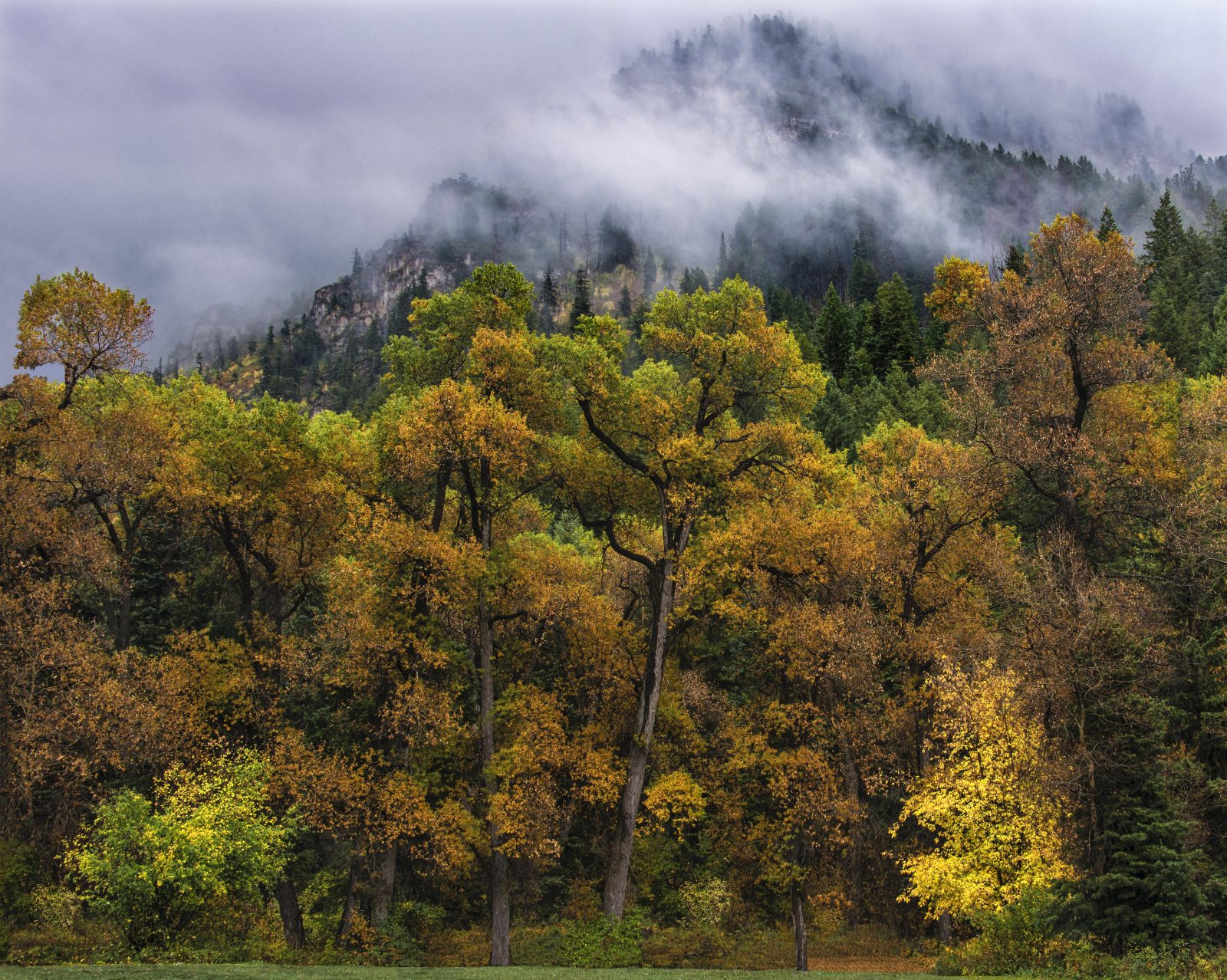 Muted Colors of Fall