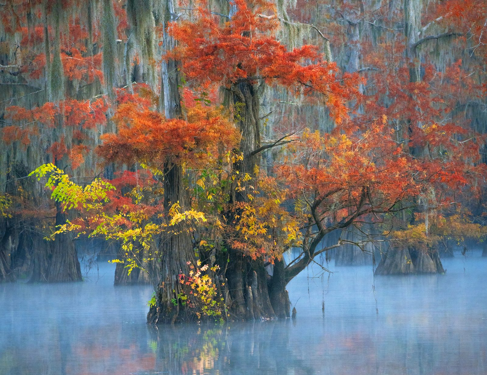 Beauty of the Bayou