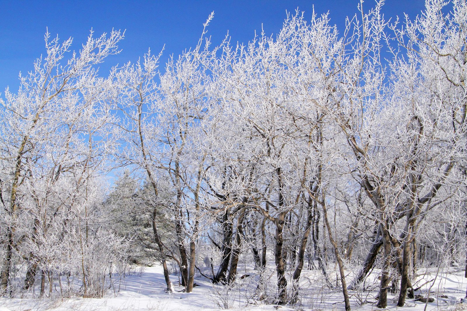 Snow piled up on branches in winter