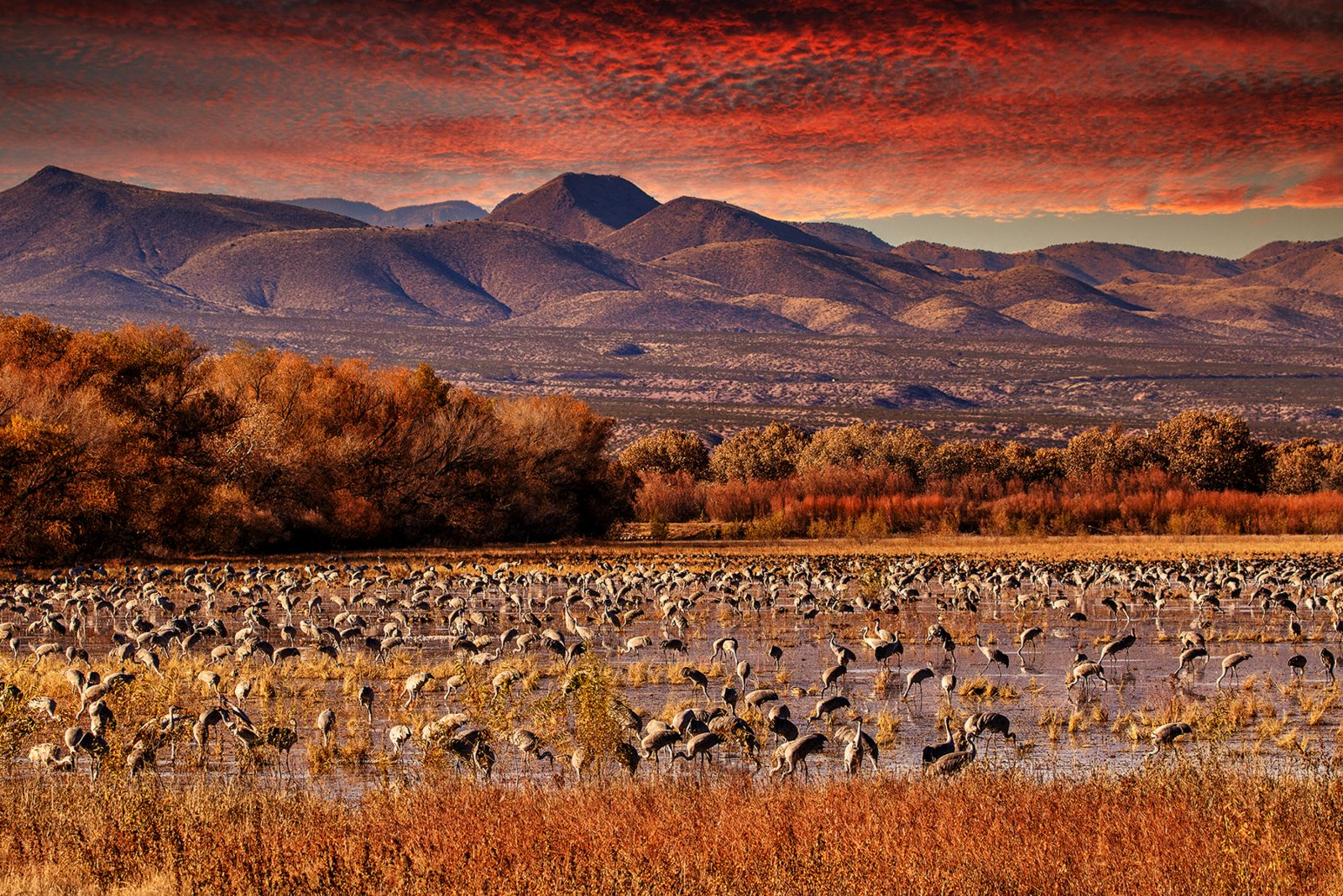 A haven for migratory birds enjoying the twilight