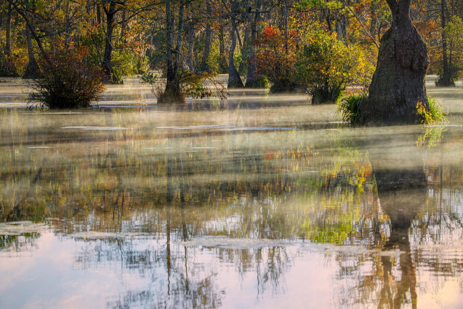 The mystery of the early dawn swamp without anyone