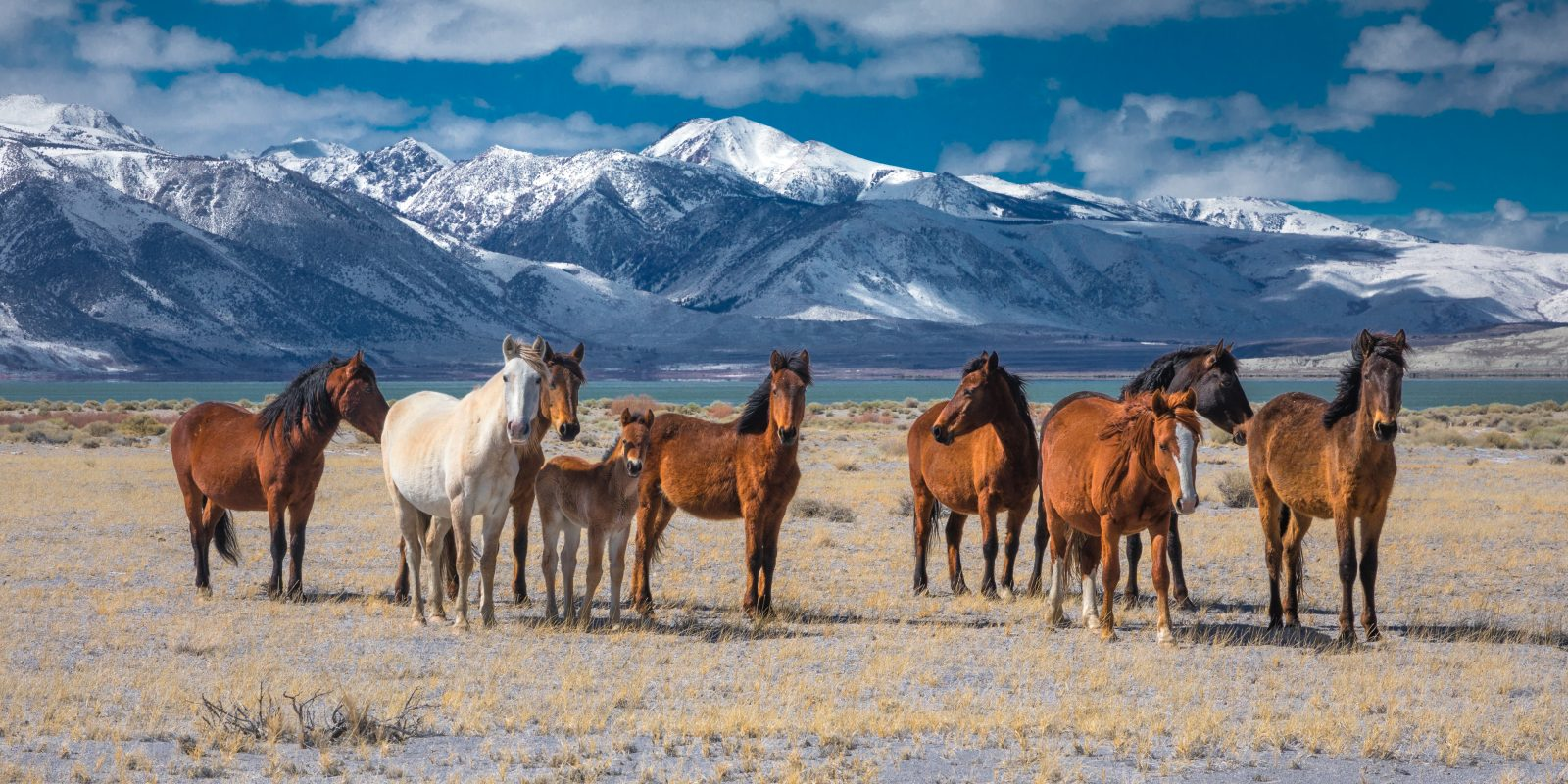 Moment with Mustangs