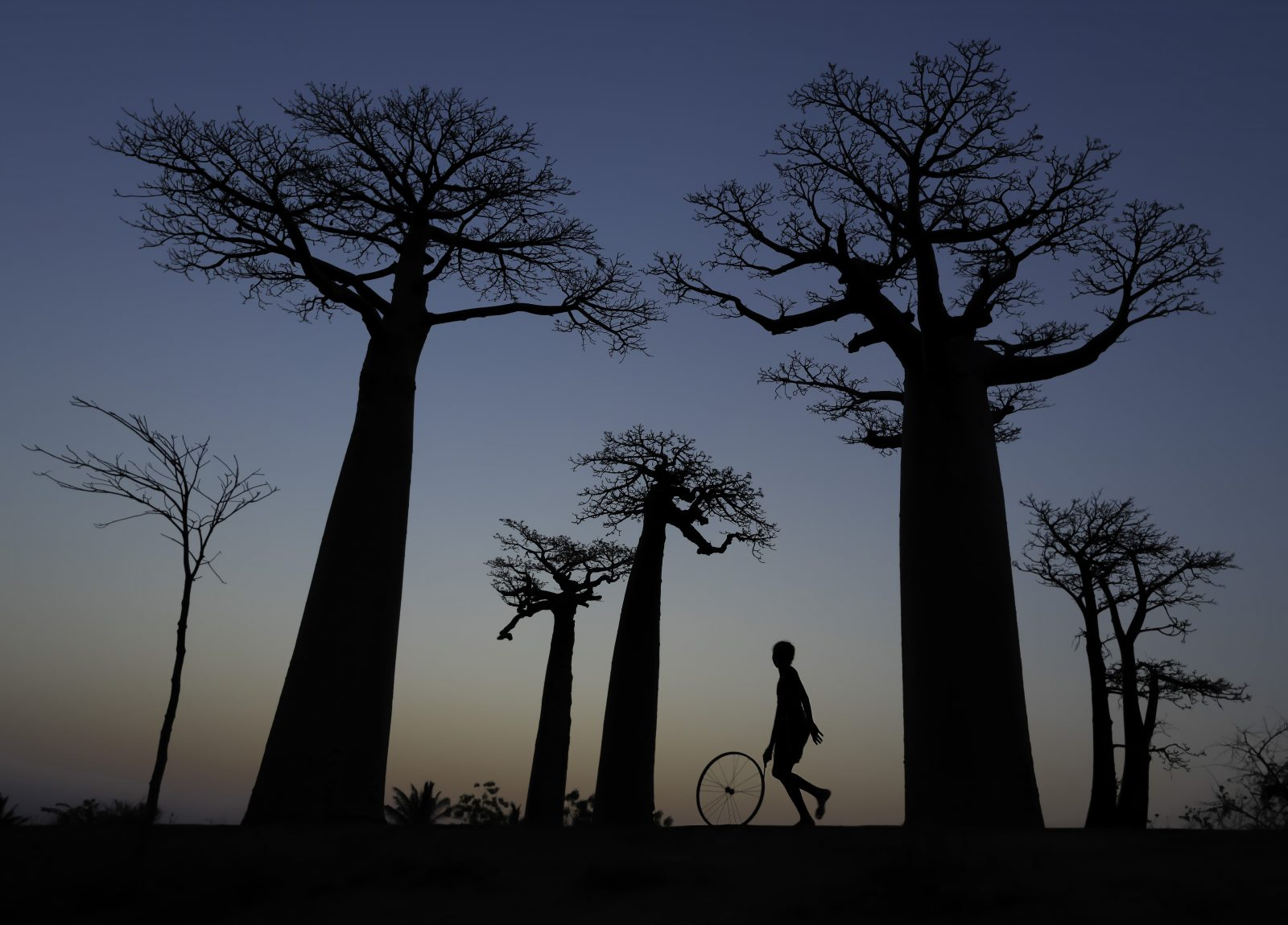 Child at Play Avenue of the Baobab Trees