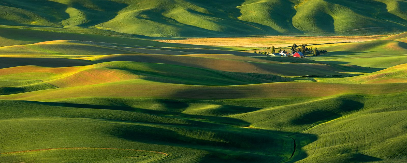 The Palouse Countryside