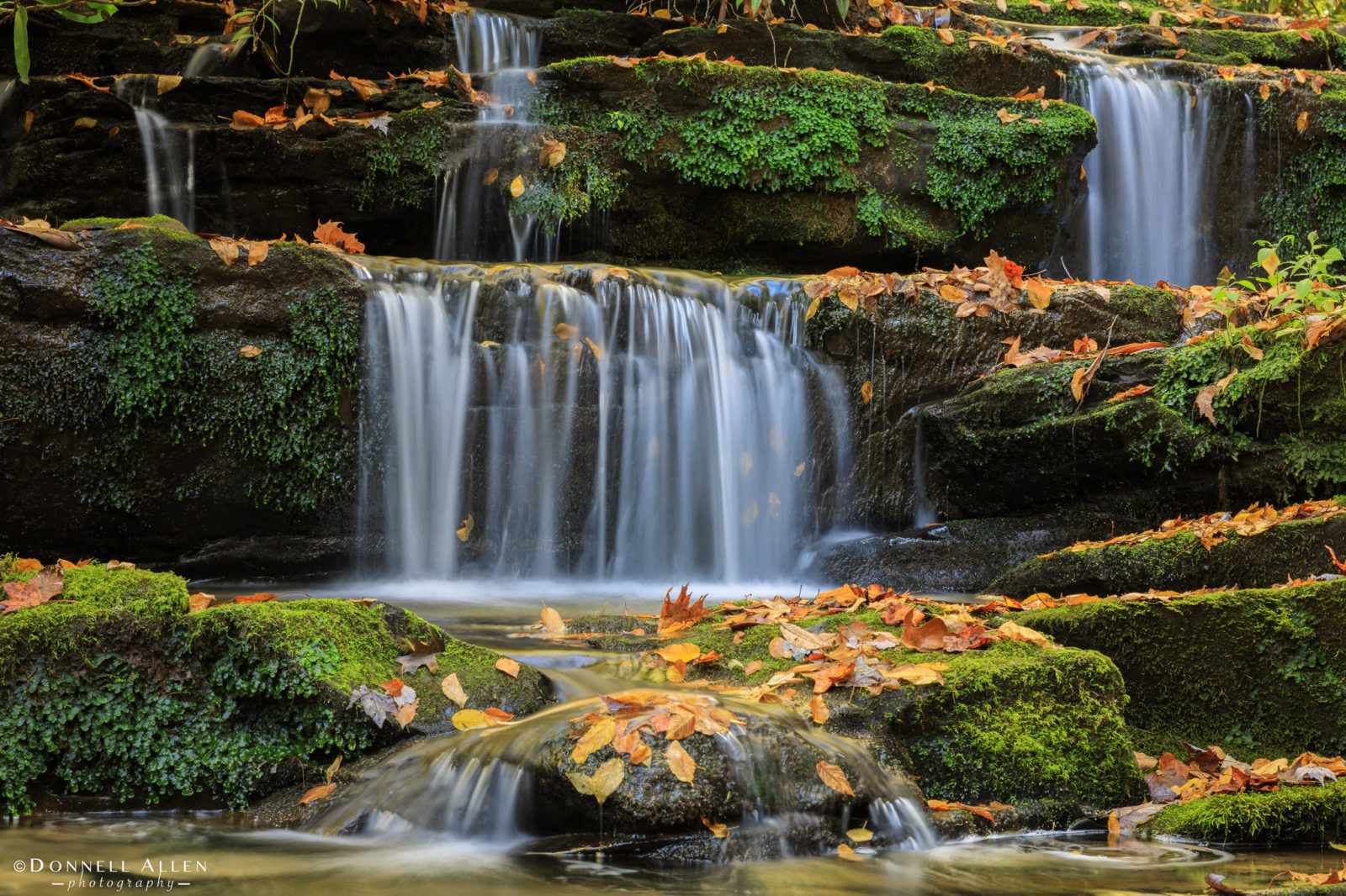 Fall on Rhododendron Creek