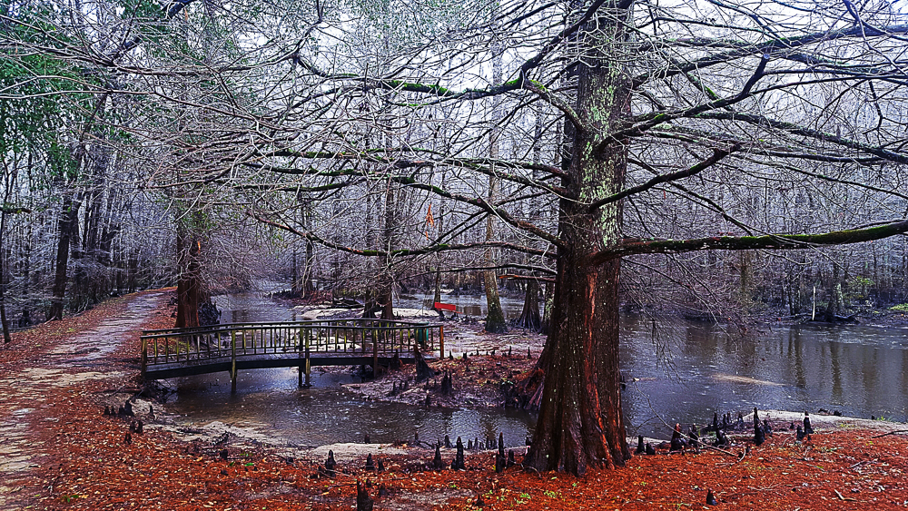 A Touch Of Winter On The Creek