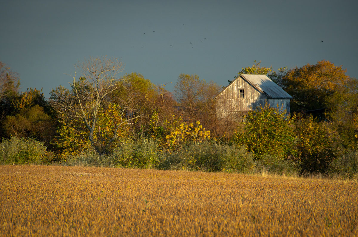 Abandoned Barn In The Trees