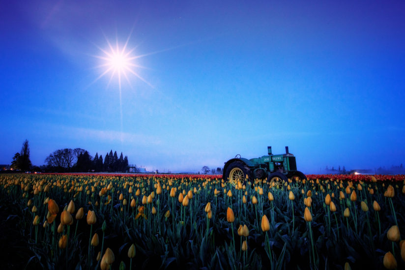 Tulips & The Serious Moonlight