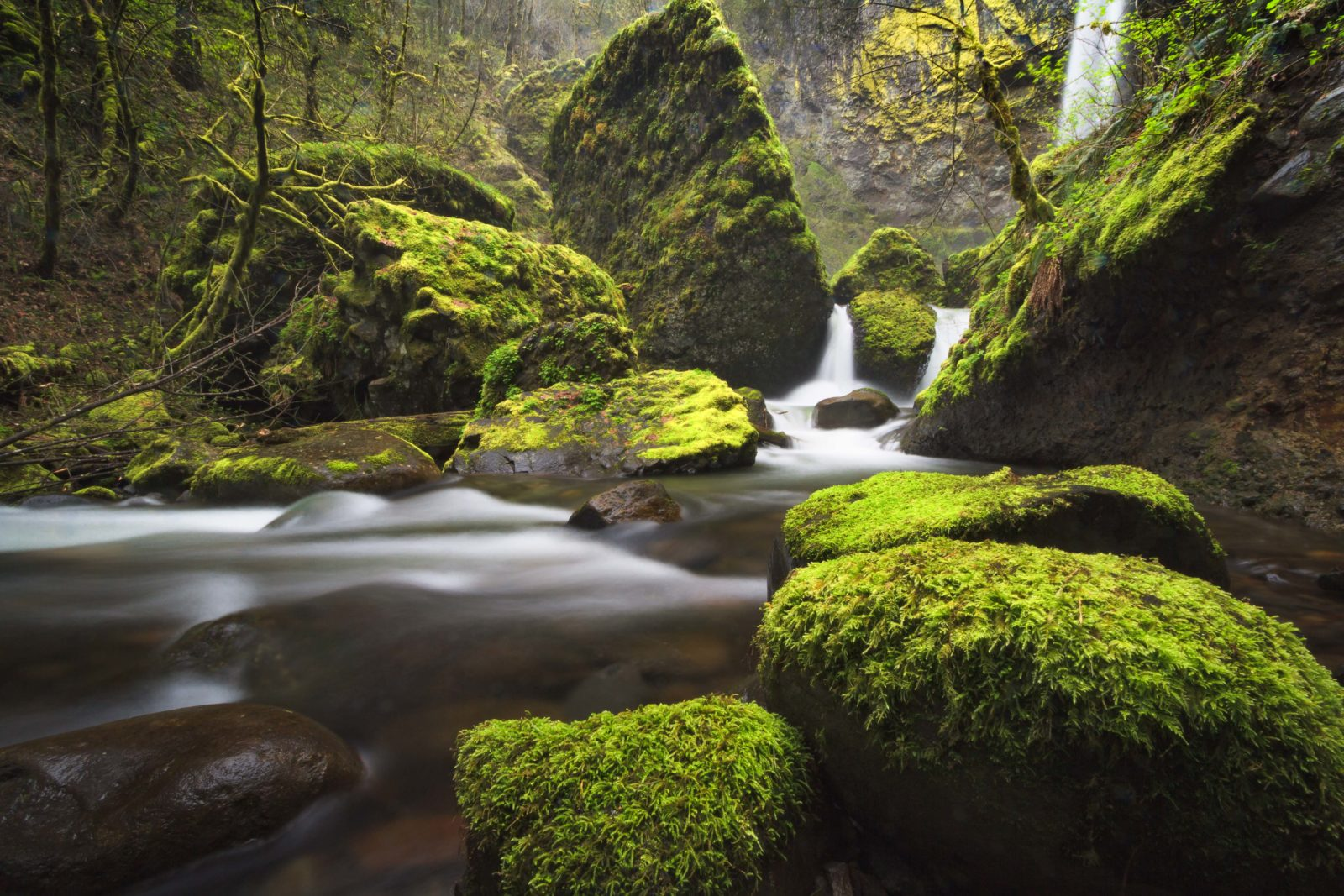 Deep Within The Gorge