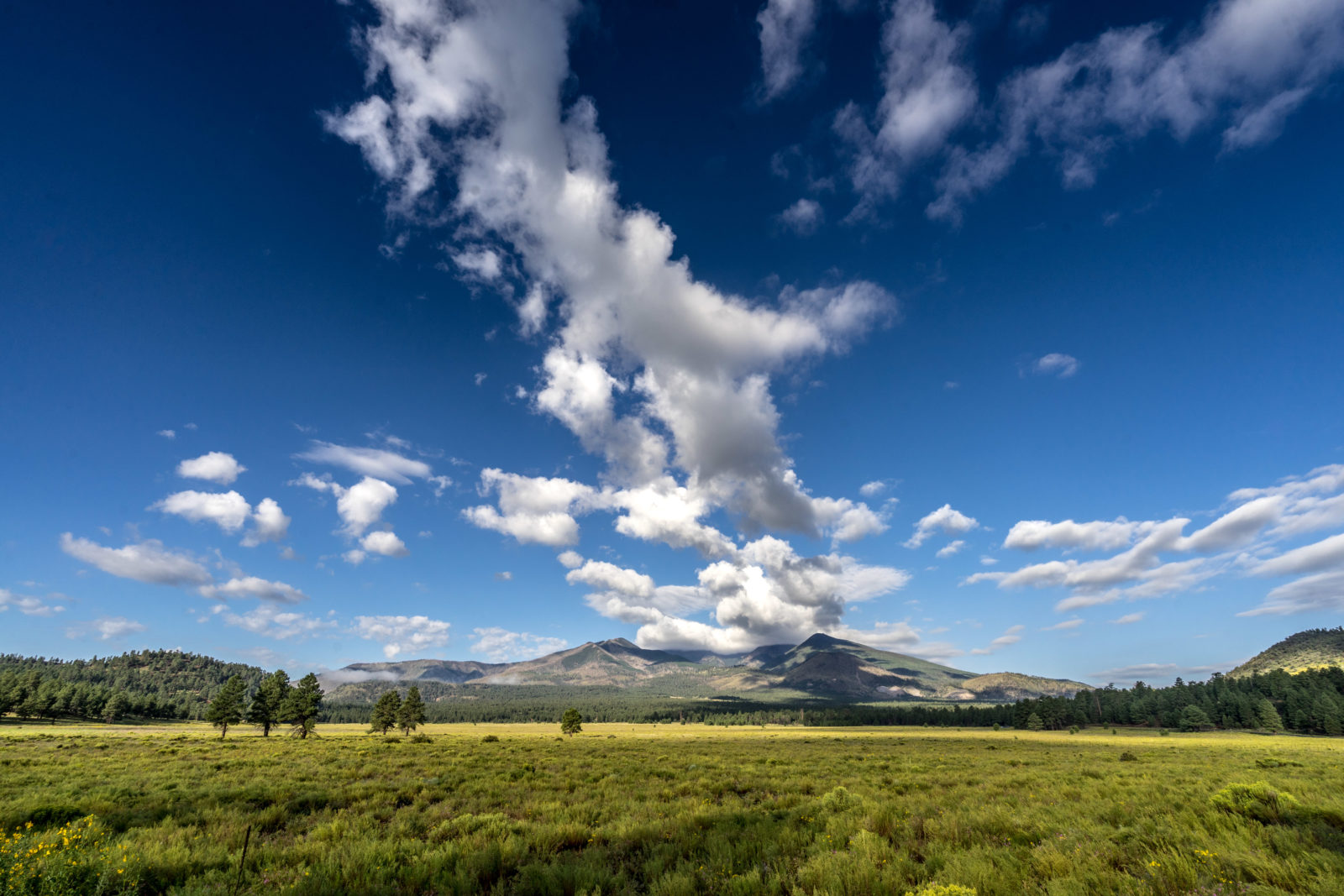 Viewing the San Francisco peaks on a summer day