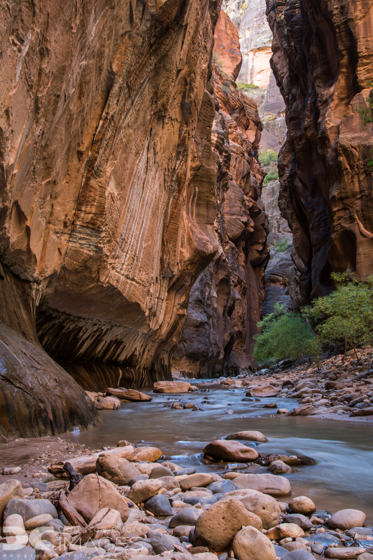 Zion's Virgin Narrows