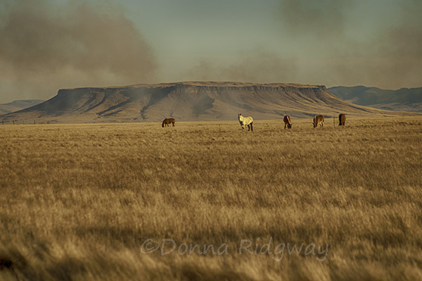 Stubble Field Smoke at Square Butte