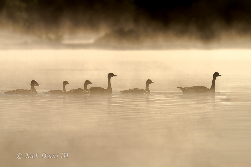 Canada Geese Silhouettes