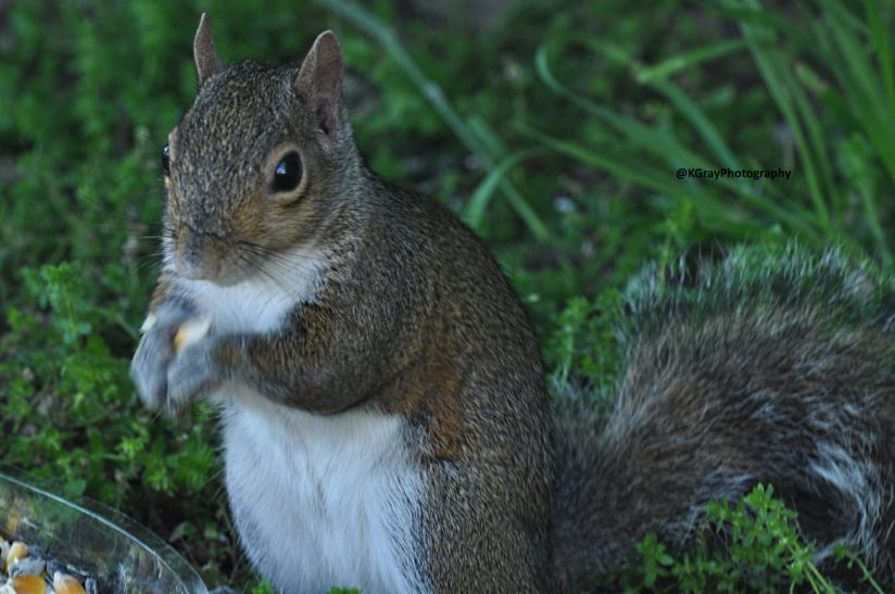 Wally the Squirrel