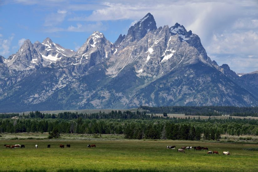 Grazing Below The Tetons