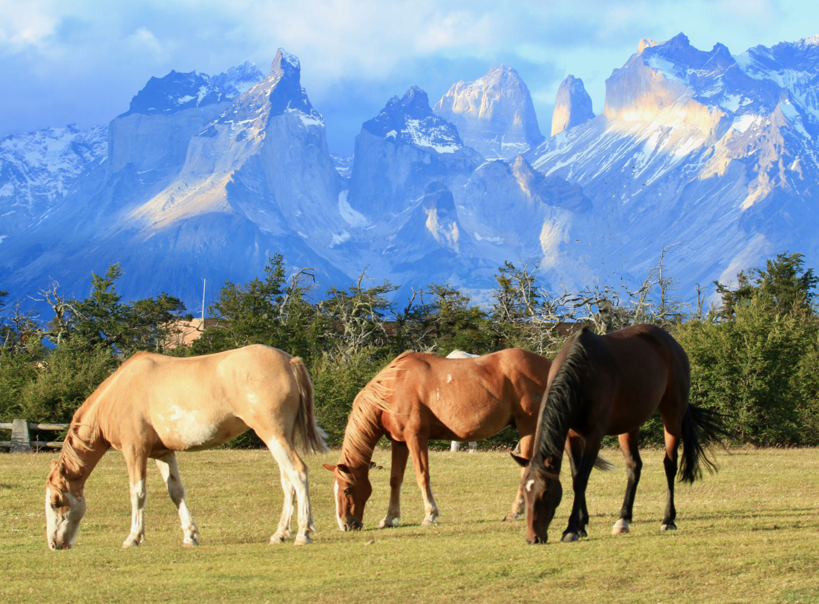 Grazing at Torres del Paines
