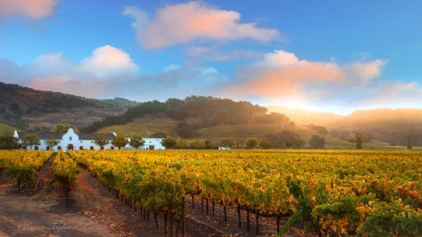Napa Valley Sunrise Glow