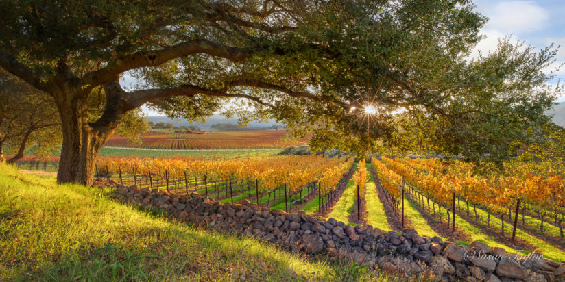 A Sunset in the California Wine Country