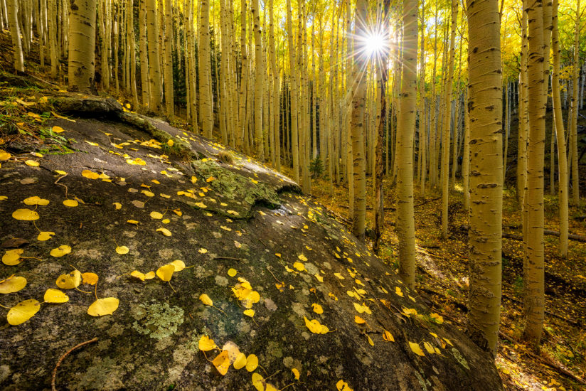 Aspen Dreaming (wide view)