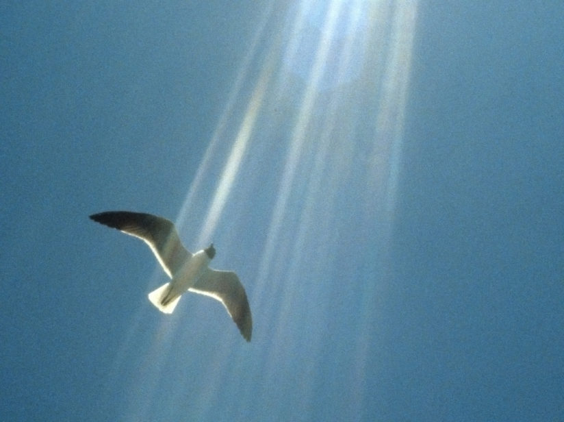 seagull in light shafts