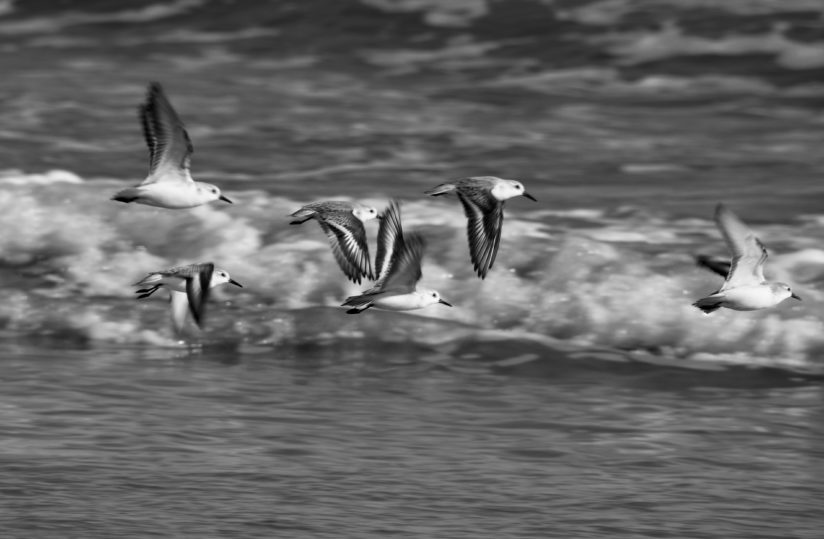 Flying in Black & White