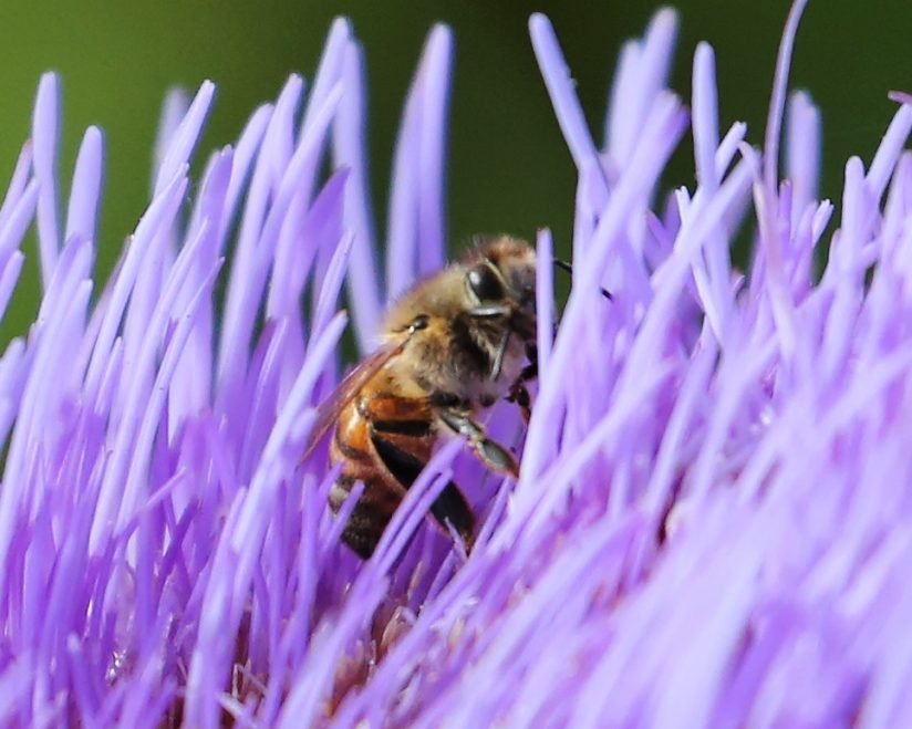 I'll Bee Watching You