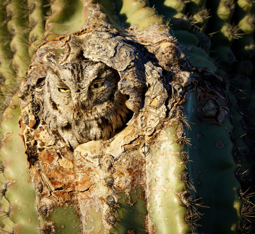 The Cactus Has Eyes