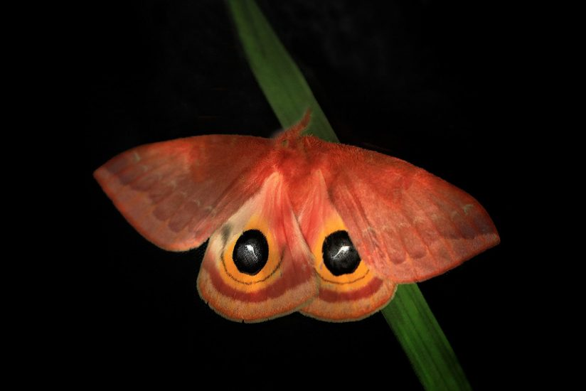 Moth in the Wild