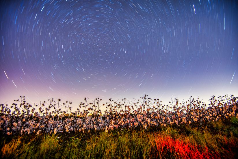 With the stars in the cotton field