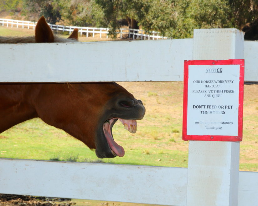 Horse Laughing At Sign