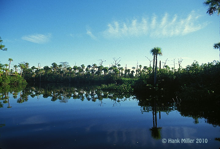 Loxahatchee River Reflection