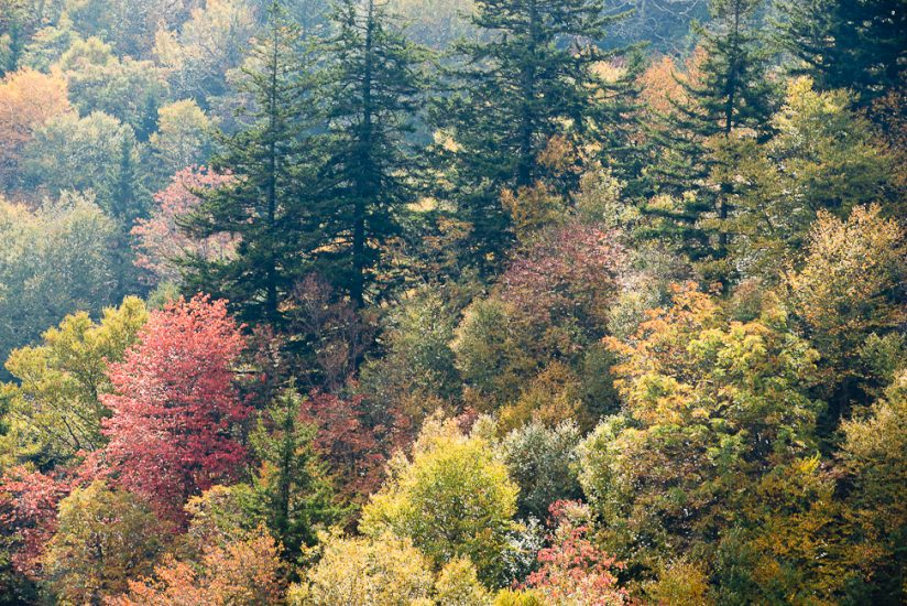 Blue Ridge Parkway Autumn