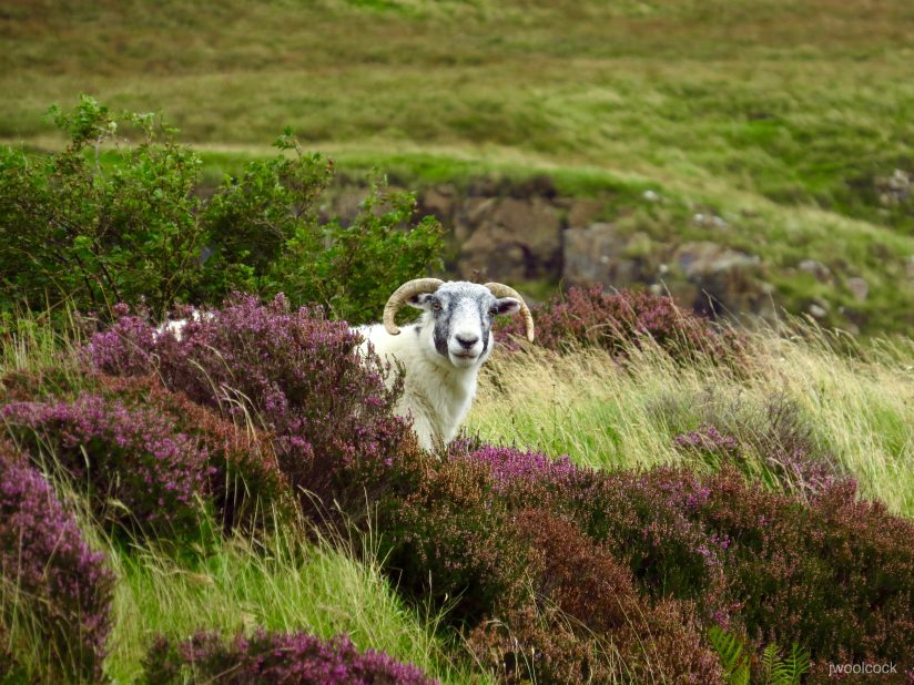 Behind the Heather