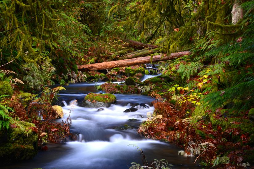 Fall – Goldstream.
