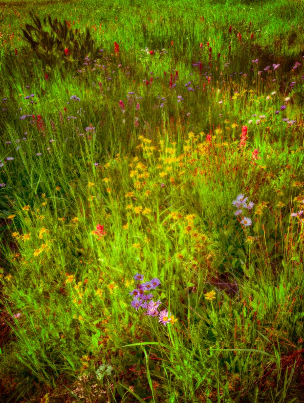 Late Summer's Palette