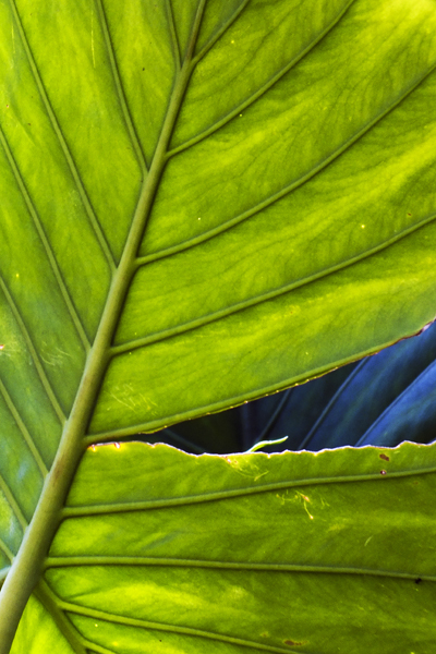 Tropical Leaf Outdoor Photographer Your favourite piece from our refreshed classic collection? outdoor photographer