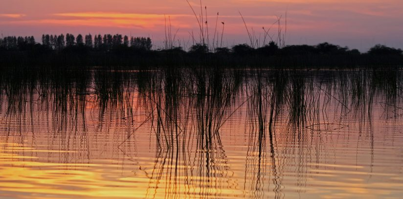 Sunset over marsh