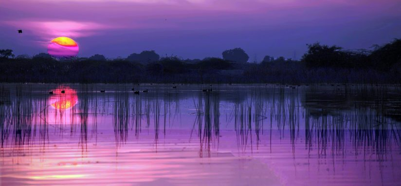 Tranquil sunset over wetlands
