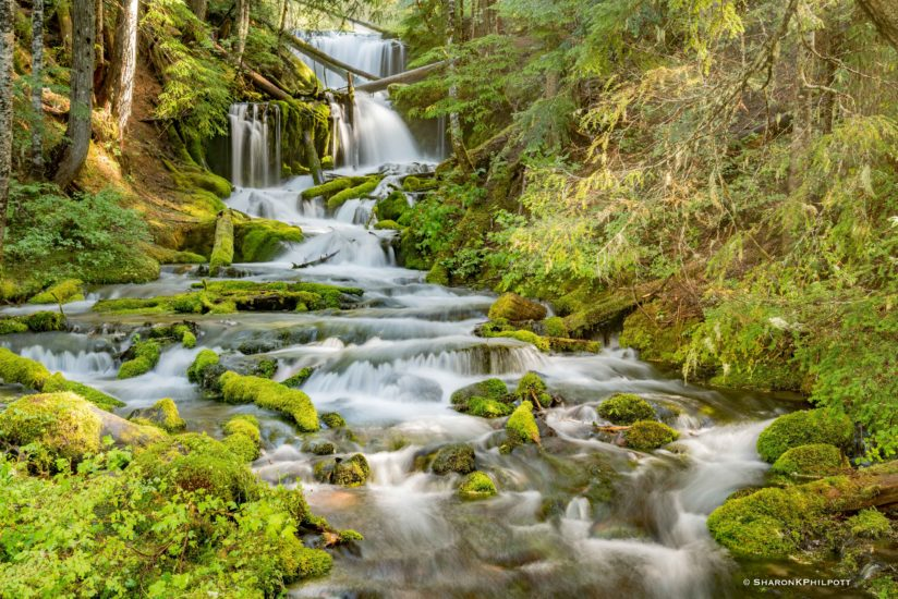 Waterfall – Gifford Pinchot National Forest