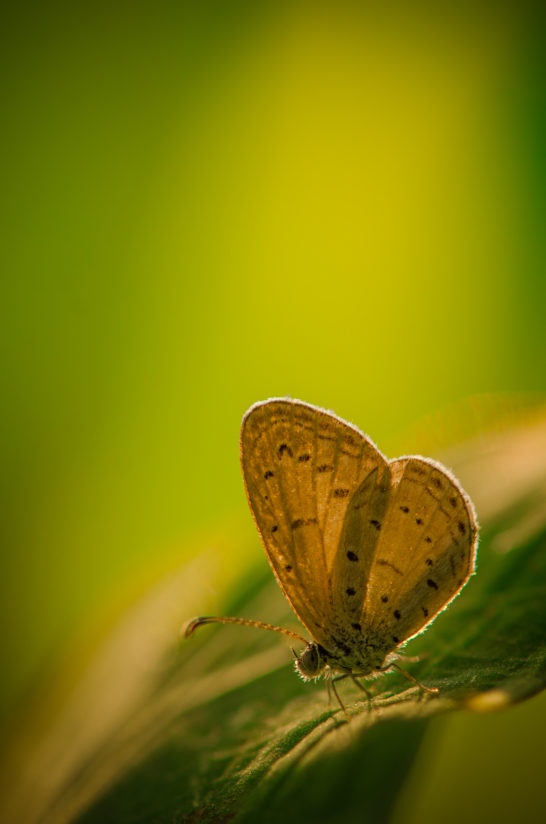 The Butterfly in the morning light