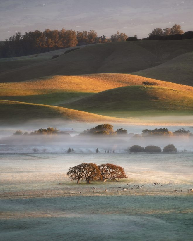 Chilly winter morning in California countryside