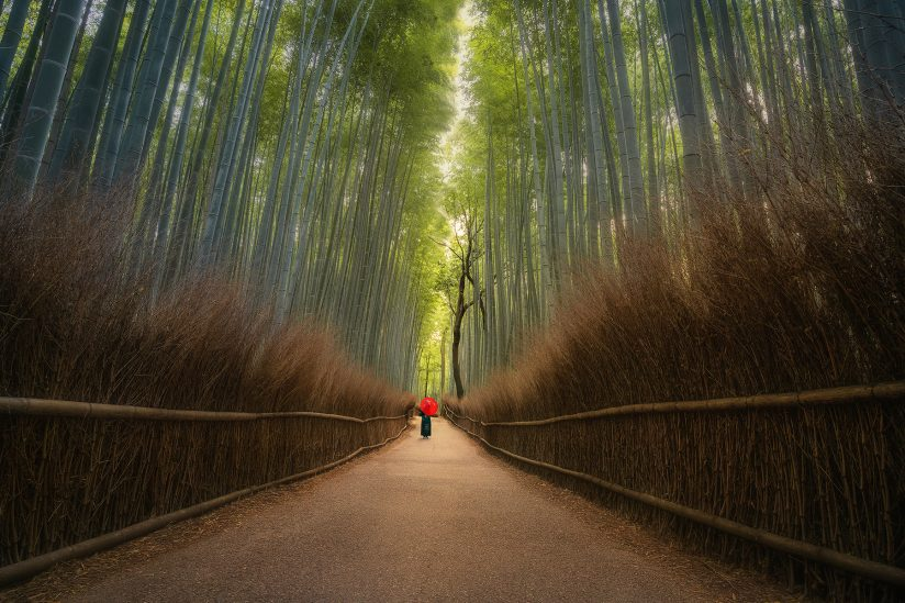 Morning in the bamboo forest