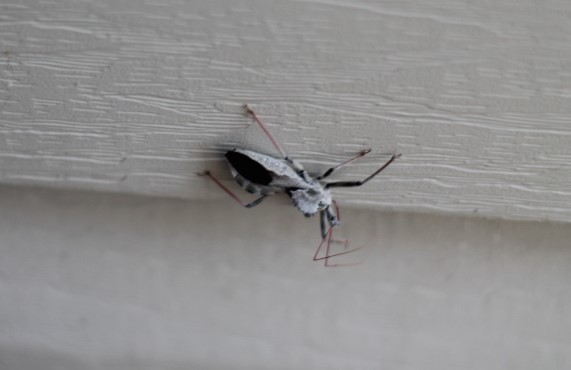 Strange South Carolina insect